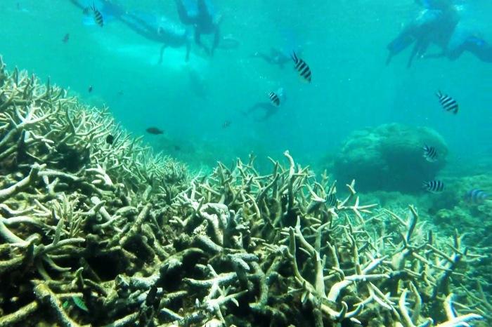 Reef10