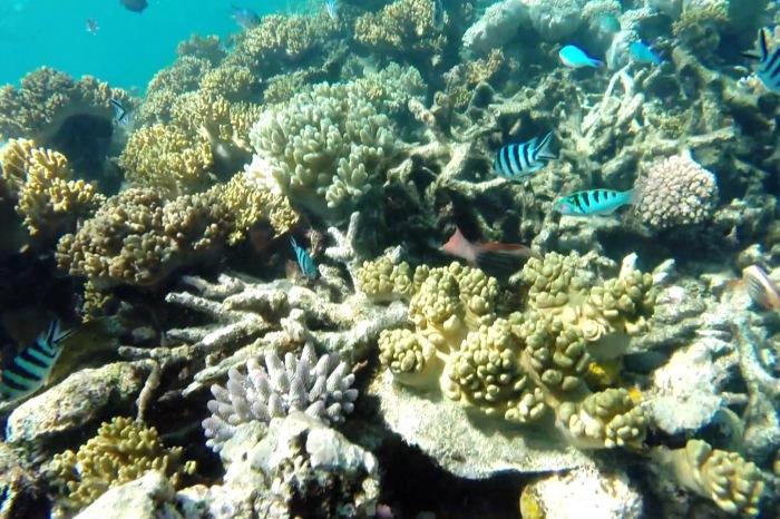 Reef16