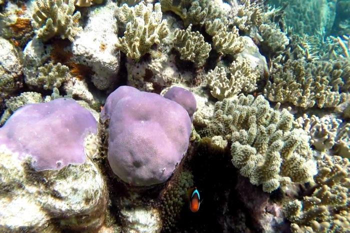 Reef26