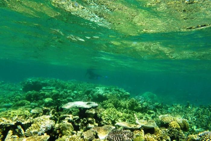 Reef32