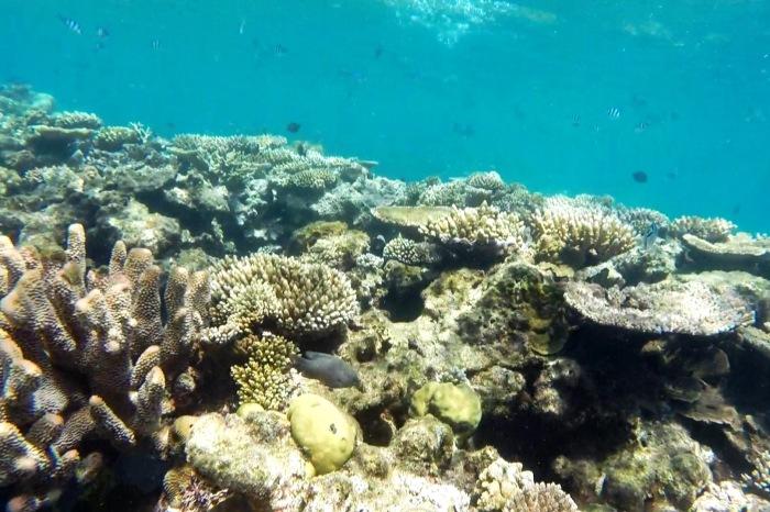 Reef8